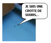Capture crotte rongeurs.PNG